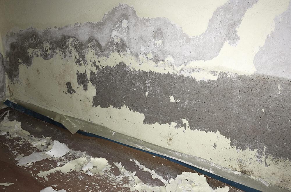 Gebäudetrocknung (3)