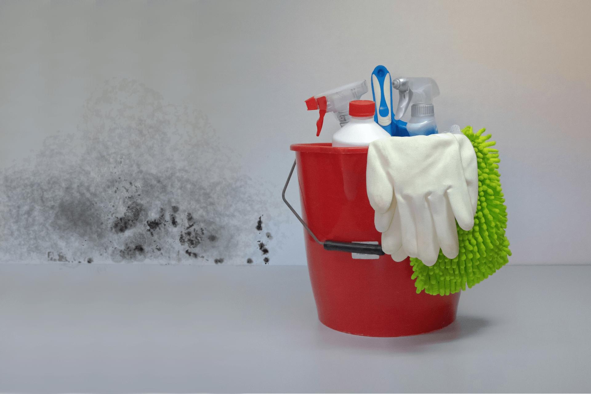 Schimmel und Reinigungsmittel