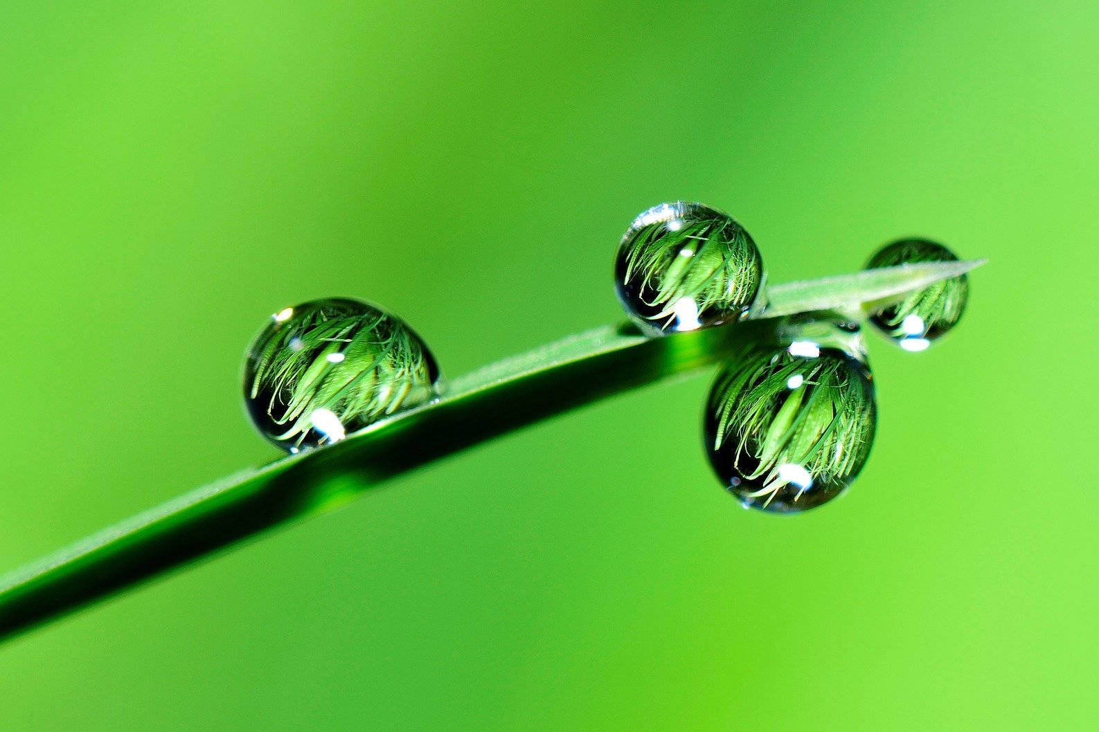 Wassertropfen Grashalm