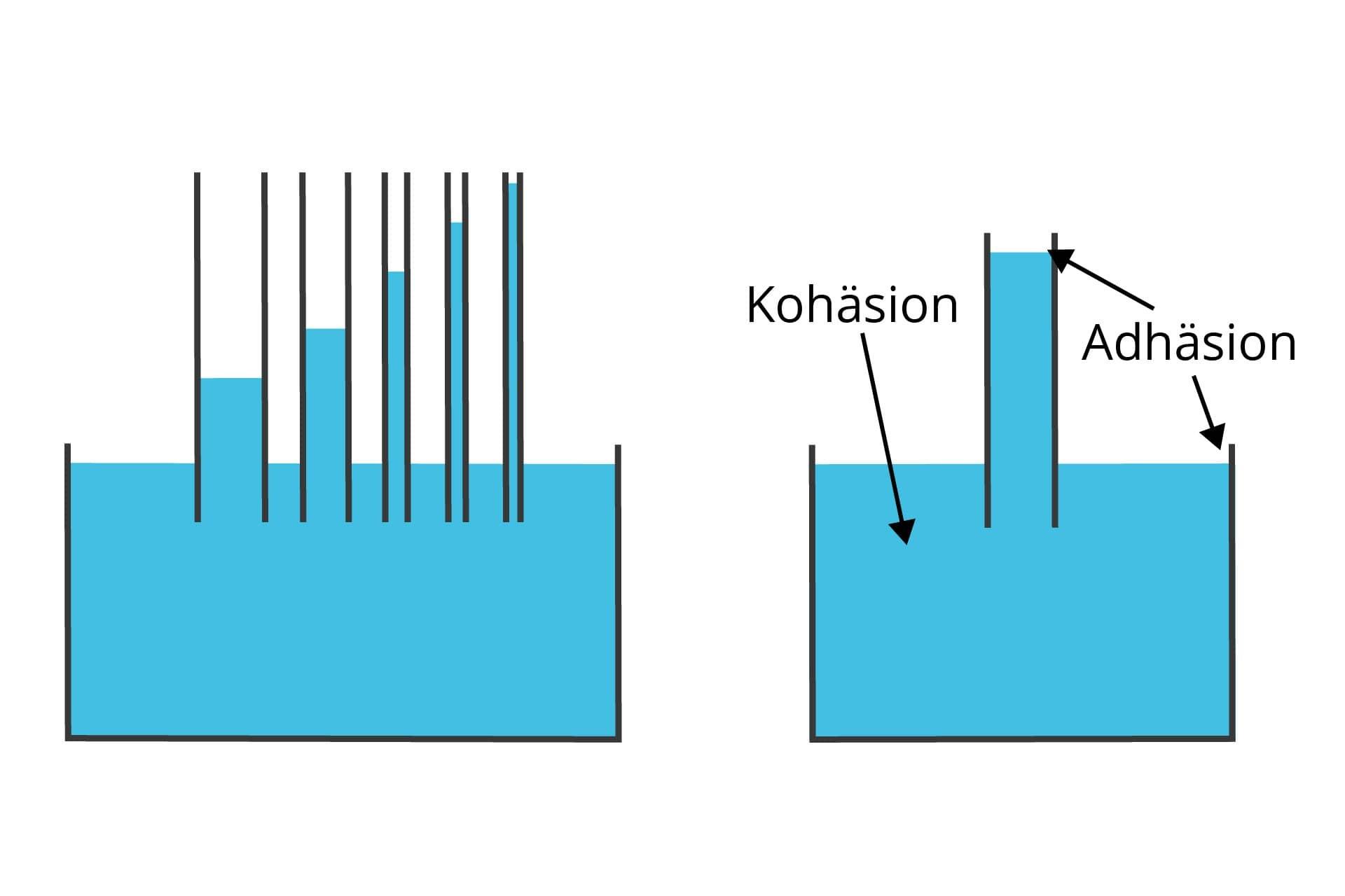 Kapillarwirkung mit Adhäsion und Kohäsion