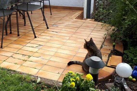 Terrassenfliesen mit Schäden