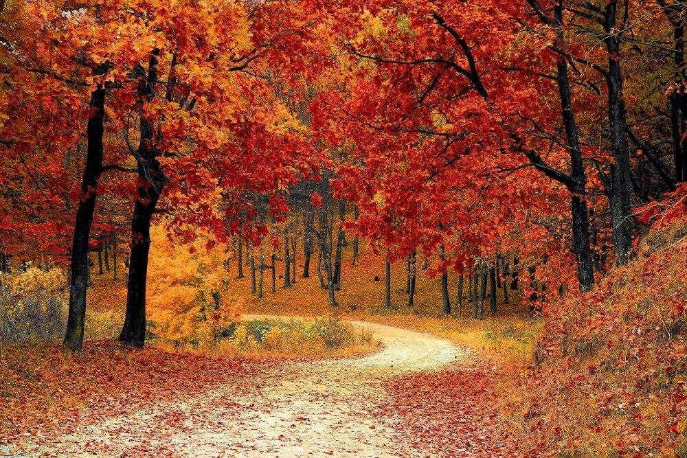 Wald Symbol für Herbst