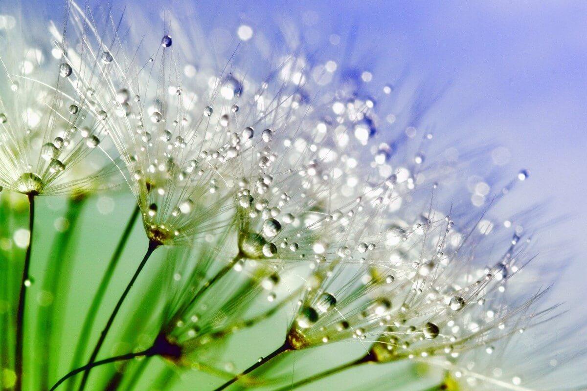 Pflanzen mit Wassertropfen aus der Luftfeuchtigkeit